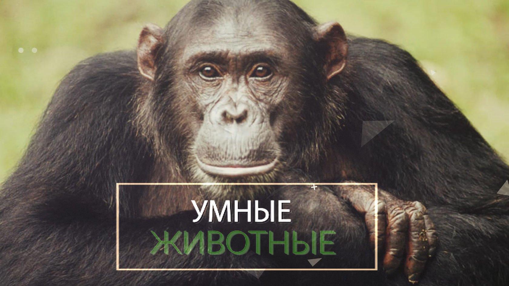 Человек среди животных доклад 407